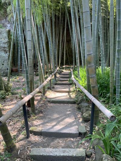6月の鎌倉~竹林の美しい英勝寺~鎌倉五山第三位の寿福寺  小町通りをぶらぶら♪