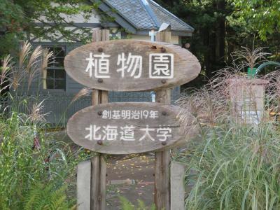 何十年ぶりでしょう ~北海道大学植物園~ 探訪記 ①