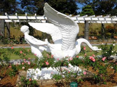 生田緑地ばら苑の秋薔薇