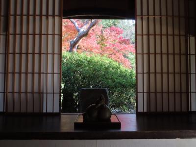 古都の紅葉(6) ☆ 京都のたぬきは 全然たぬきじゃない!