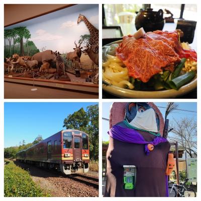 2020.10 近江で鉄道乗り歩く(2)信楽高原鐵道で滋賀サファリ博物館と近江牛を楽しもう。