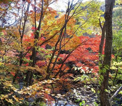 団塊夫婦の2020年日本紅葉巡りドライブー(関東3)谷川岳から奈良俣ダム・照葉峡を経て丸沼高原へ