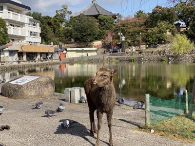 「休日ぶらり旅きっぷ」でお出かけ。奈良で鹿に遊ばれる。