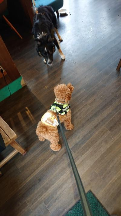 甲斐君と長湯ダムを一望するカフェジプシースマイルカフェへGO看板犬テラ君となかよく甲斐君は過ごしました。