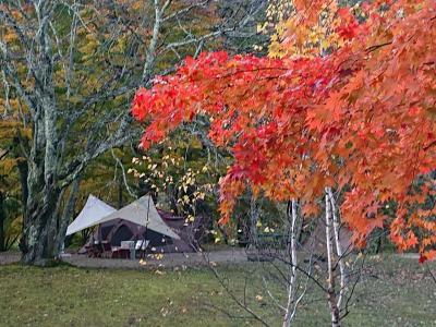 紅葉のワイルドフィールズおじかでキャンプ