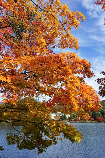 紅葉を見に 二日目の1 御射鹿池 横谷峡展望台 蓼科湖