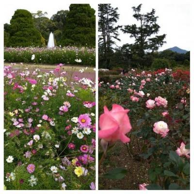 秋桜と秋薔薇の饗宴~京都府立植物園~2020