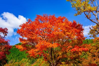 九重高原の紅葉 2020