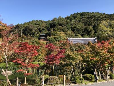 Go To 京都 9 南禅寺 永観堂 大豊神社 ブルーボトルコーヒー