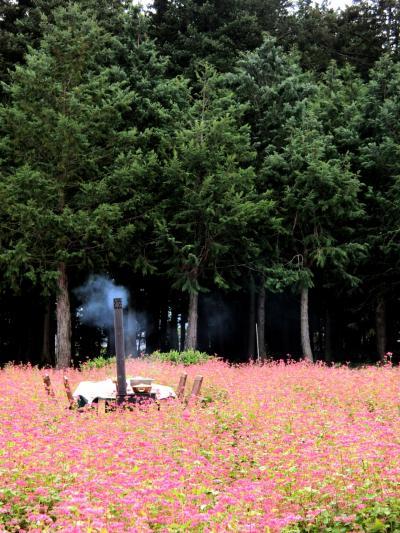 2020年 10月 長野県・箕輪町 Go Toトラベルで行く南信州の旅! 赤そば畑の真ん中でランチ!