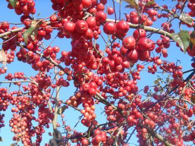 秋の南信州 ウルトラ10