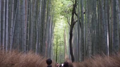 京都へGOTO 3泊4日(3日目)