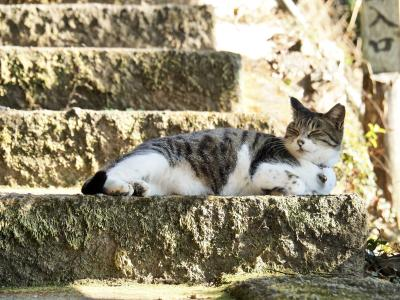 唐澤山城跡に行ったら、そこは猫ちゃんの楽園だった!