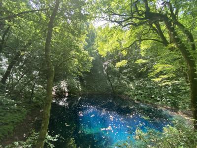 青森・秋田の旅 ②神秘的なブナの森と青池 秋田へ