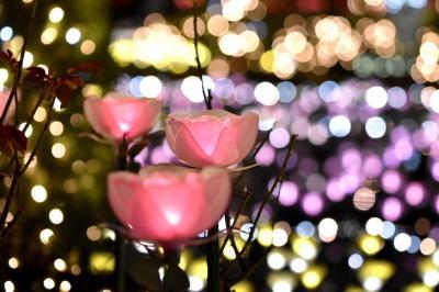 日本三大イルミネーション☆あしかがフラワーパーク☆本当に素敵で綺麗でした(*´▽`*)