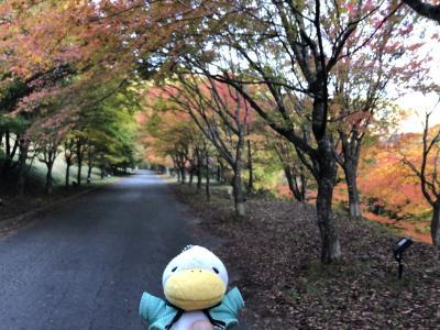 一足早く長野県の伊那市もみじ湖に紅葉を見に行きました