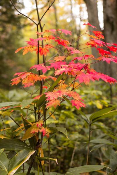 白金温泉周辺の秋