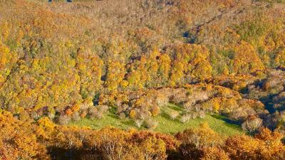 秋の函館大沼でカナディアンカヌーと函館七飯ゴンドラ、紅葉の谷の紅葉
