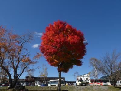 紅葉狩りに蓼科へGo 1/4 紅葉の名所:御射鹿池と北八ヶ岳ロープウェイ