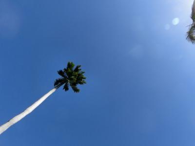 (二年を経てようやく書く)寒波の洗礼!常夏(?)のハワイ①