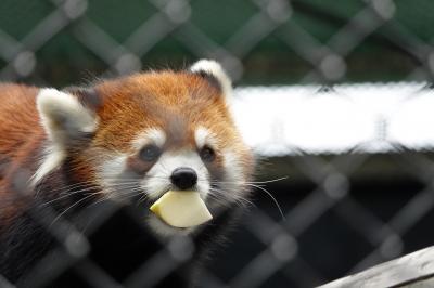 大牟田市動物園&福岡市動物園 3月に見たレン君のマズルの腫れの回復が気になる@大牟田ズー そして、 新(仮?)放飼場でこんにちは@福岡ズー