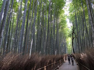 竹林の道に行きたくて京都嵐山へ