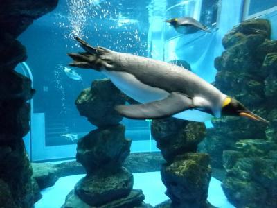 JALどこかにマイルで日帰り北九州にまいる☆下関でペンギンとフグ水族館