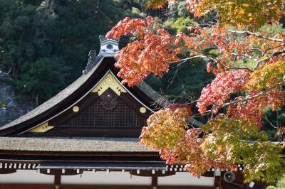 20201103-1 京都 日頃の感謝に、日本第一酒造之神へ。松尾大社。