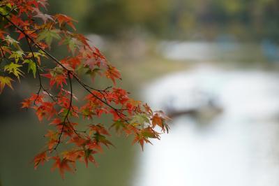 20201103-3 京都 松尾大社から桂川散歩で嵐山渡月橋。さらには大悲閣千光寺まで。