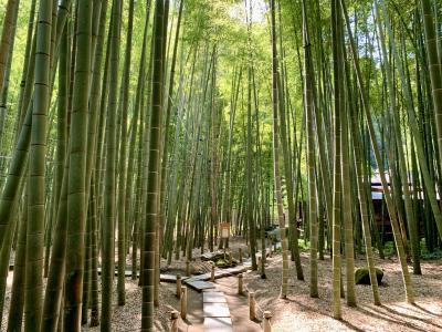 鎌倉でお寺巡りと美味しいお蕎麦(杉本寺・長谷寺・報国寺など)