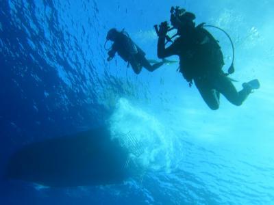 2020 秋の阿嘉島 今年4度目のケラマブルーを潜る!