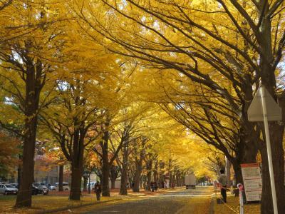 札幌の黄葉と紅葉・北海道大学2 ~ 2020