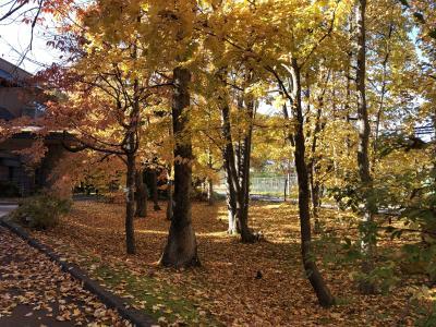 秋たけなわの北海道 -今春行けなかった海外旅行のリベンジ&お見舞いー