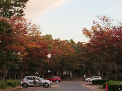 舞岡公園の秋景色とバスロータリー-2020年秋