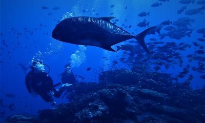 秋 沖縄ダイビング 慶良間諸島「ウチザン礁」
