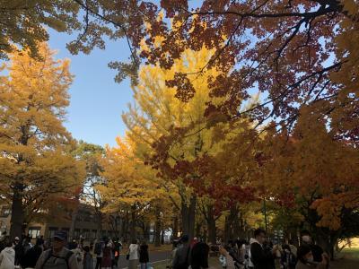北国の秋2020 1/2札幌の秋