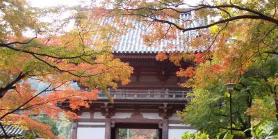 地味だけど紅葉が綺麗だった池田の久安寺