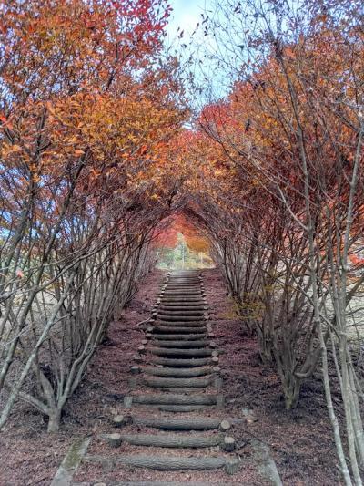 三つ峠山(健脚コース:登り)