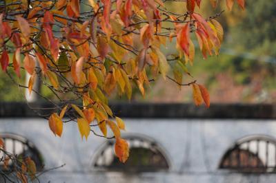 20201108-2 京都 お寺さん行く途中、山科疏水散歩