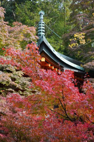 20201108-3 京都 少し早いけれど、毘沙門堂の紅葉
