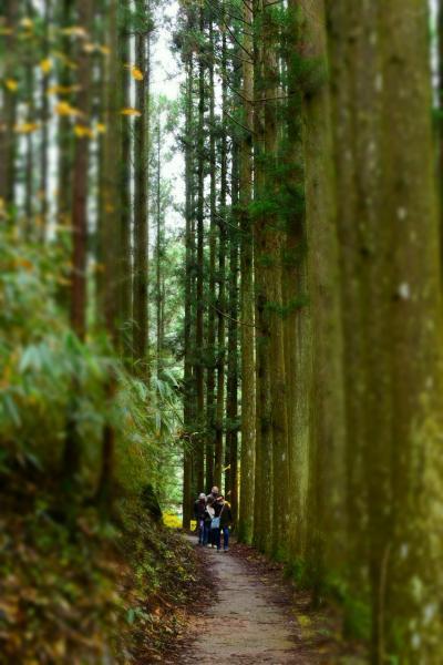 秋を彩る具だくさんの秘境『五家荘』 せんだん轟で森林浴