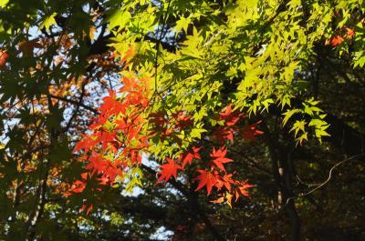 秋の森を楽しむ「赤城自然園」