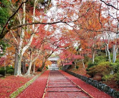 2019年11月~京都の紅葉【秋の特別早朝拝観】