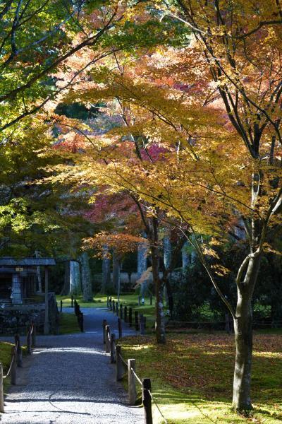 20201109-1 京都 朝から大原へ。先ずは三千院。