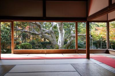 20201109-2 京都 血天井の宝泉院で、お茶をいただいたり