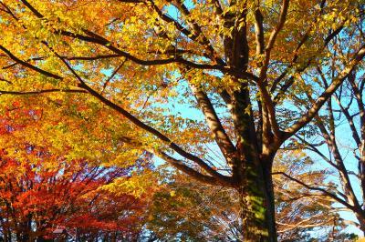 東京・小金井公園~紅葉も少し始まりました(2020年11月9日)