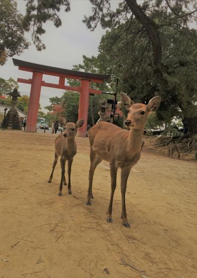 秋のお散歩  黒門市場で食べ、奈良で鹿と戯れる