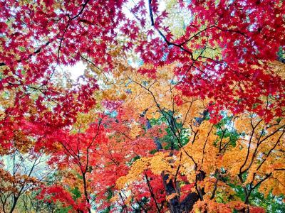 一歳三ヶ月と行く紅葉の函館