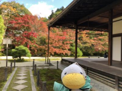 2020年一足早い京都の紅葉