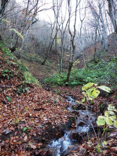 Go To 第五弾:冬期閉鎖3日前の白神山地『世界遺産の径 ブナ林散策道』(緩衝地域)